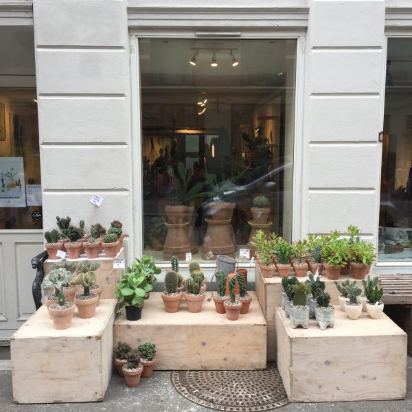 Kaktusų parduotuvė Jægersborggade gatvėje